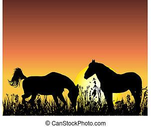 ló, napnyugta, háttér