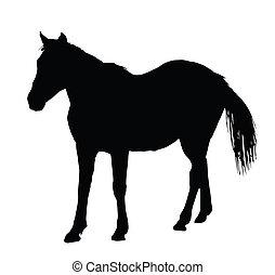 ló, portré, álló, nagy, árnykép