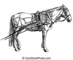 ló, rajz, ábra, kéz