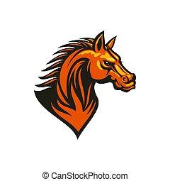 ló, sport, kabala, fej, amerikai félvad ló, lovaglási, izolál