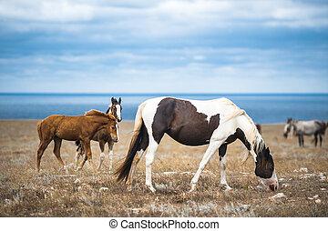 ló, természet, tanya, sorozat, állatok, mező