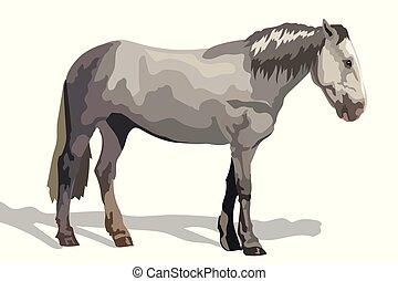 ló, vektor, szürke, színes