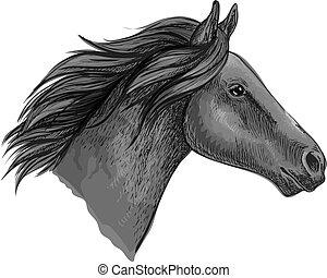 ló, versenyló, csődör, fej, fekete, skicc