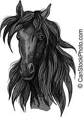 ló, versenyló, fej, arab, fekete, skicc