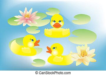 lótusz, menstruáció, kiskacsák, tó, úszás
