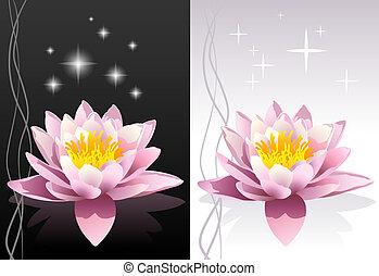 lótusz, vektor, virág