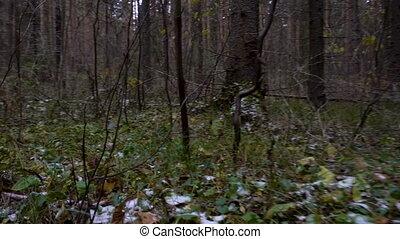 lövés, aljnövényzet, erdő