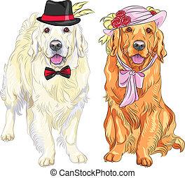labrador, hölgy, nyak, úriember, íj, csípőre szabott, dogs:, pár, csomó, white virág, gyeplő, piros kalap