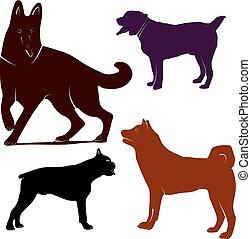 labrador, kép, kutya, vektor, háttér, fehér