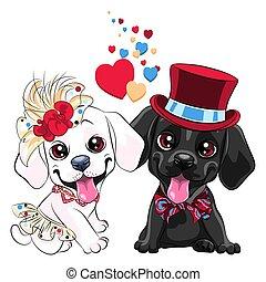 labrador, kutyák, szerelmes pár, csinos, vizsla