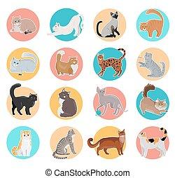 lakás, ikonok, gyűjtés, macska, vektor, tervezés