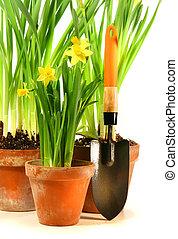 lapát, cserépáru, kert, nárciszok, három