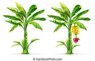 leaves., bitófák, tropikus, pálma, vector., gyümölcs, banán