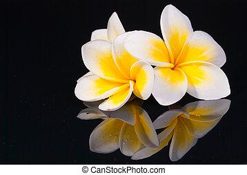 leelawadee, virág, -e, reflecio