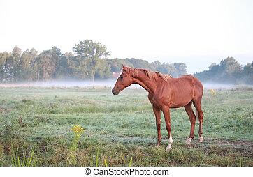 legelő, ló, reggel