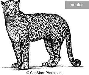 leopárd, ábra, bevés