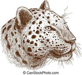 leopárd, metszés