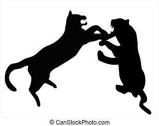 leopárdok, verekszik, között