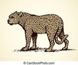 leopard., ábra, vektor