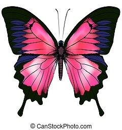 lepke, elszigetelt, ábra, háttér., vektor, white piros, butterfly.