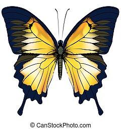 lepke, elszigetelt, sárga, ábra, háttér, fehér, butterfly.