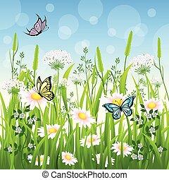 lepke, nyár, virág, kaszáló