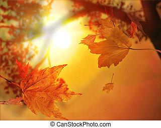 levél növényen, ősz, bukás