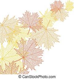 levél növényen, bacground, makro, ősz, vektor, maple.