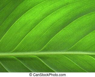 levél növényen, closeup, zöld