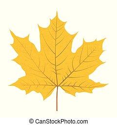 levél növényen, elszigetelt, sárga, ősz, háttér, fehér