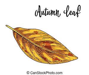 levél növényen, elszigetelt, sárga, ősz, háttér., vektor, ábra, fehér