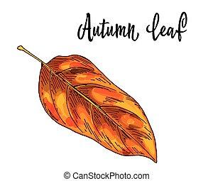 levél növényen, elszigetelt, sárga, ősz, háttér., vektor, ábra, narancs, fehér