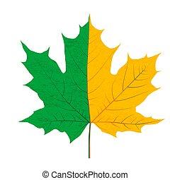 levél növényen, fél, zöld, sárga, ősz