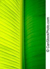 levél növényen, pálma