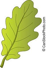 levél növényen, tölgyfa