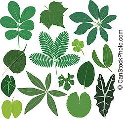 levél növényen, zöld, berendezés, tropikus