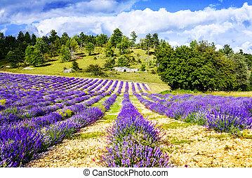 levendula, franciaország, déli