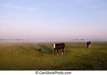 lidércek, pásztori, holland