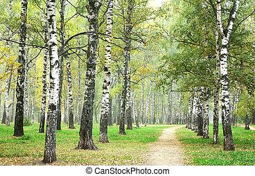liget, reggel, ősz, nyírfa, köd, gyalogjáró