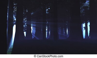 lightrays, természetfölötti, erdő, 3
