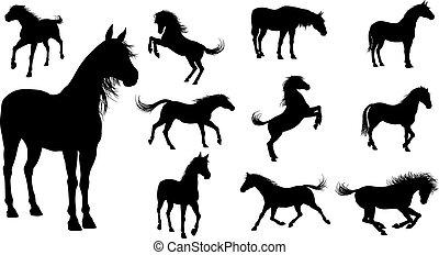 lovak, árnykép