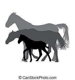 lovak, család, elszigetelt, körvonal, háttér, fehér