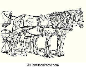 lovak, hám, vektor