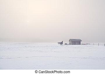lovak, ködös, hideg, tanya, reggel