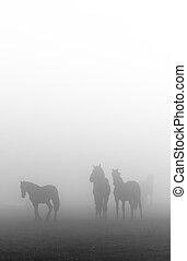 lovak, köd, reggel