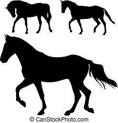 lovak, körvonal