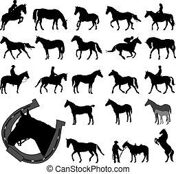 lovak, körvonal, gyűjtés