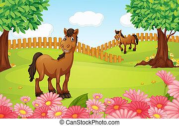 lovak, mező