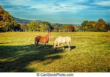 lovak, nyár, major terep