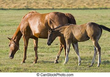 lovak, szürkület